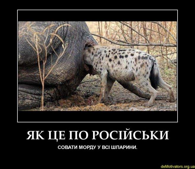 Хочу посмотреть на член слона 27 фотография